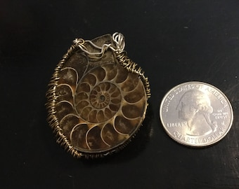 Ammonite wire wrap