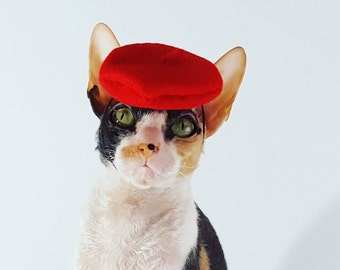 Vibrant and multi color choice beret pet sized Hat for cats dogs and more