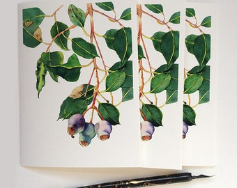 Australian nature greeting cards & envelopes set - 3 cards with print of Gum tree branch with gum nuts - blank inside