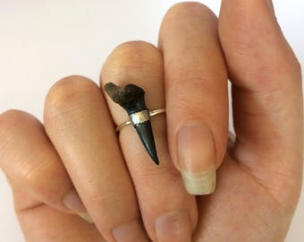 Shark Tooth Ring - Fossil Ring - Alexis Katriana