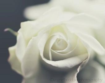 Rose photography white flower photo dreamy white rose print nature photography cream fine art print large wall art bedroom decor home decor