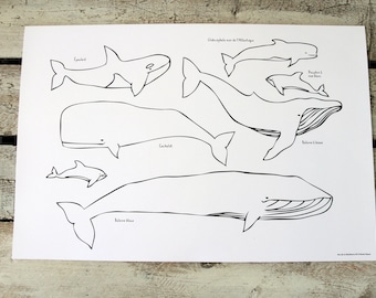 30 paper placemats WHALES to color