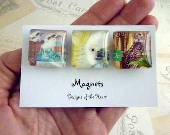 Square Glass Magnet set - Australian Stamp Collection - Australian Birds