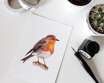 The Robin postcard, watercolor illustration