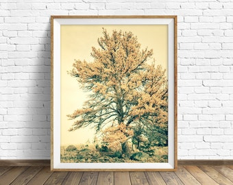 """photography, tree, instant download art, printable art, photography, instant download, farmhouse chic, nature, woodland, art -""""Past Lives"""""""