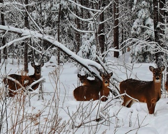 Yarding Up near Lake Superior, Duluth, MN