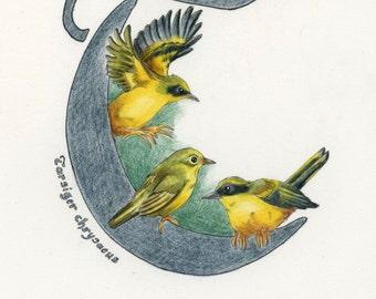 Avian Alphabet T