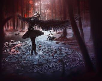 A3 print 'Black Swan'