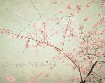 Cherry Blossom Art Photograph Lovely Dreamy Mint Green Pink blossoms Elegant Decor 8x10