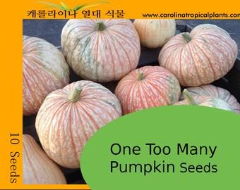 One Too Many Pumpkin Seeds F1 – 10 Seeds