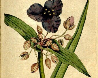 Nature print, Nature, Botanical art, Flower print, Wall decor, Nature art, Botanical, 105