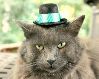 Cat Top Hat - Fathers Day Pet Hat - Spring Cat Hat - Winter Blue Teal Pet Hat