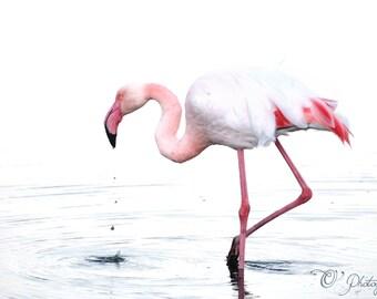 NewShopSale flamant 02 fine art photographie impression - cadeau gouttelettes oiseau tropical art nature pastel chambre rose blanc maison 4 x 4 10 4 x 6 x 10 12x16