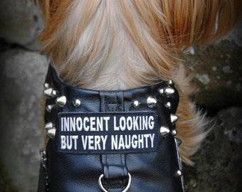 Can't Be Good Dog Biker Harness- Harley Davidson Triumph Indian Custom Punrock Rockabilly stud spike collar dog costume