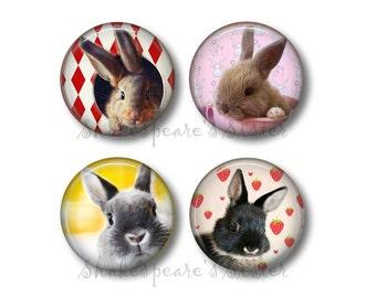 Bunny Rabbit Art - Fridge Magnets - Rabbit Decor - 4 Magnets - 1.5 Inch Magnets - Kitchen Magnets