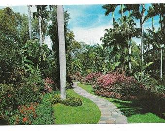 Vintage Florida Chrome Postcard St Petersburg Sunken Gardens Winding Trail Flowers UNUSED