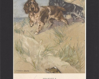 Spaniels Vintage Dog Print George Vernon Stokes - 1947 Print of Spaniel Drawing - Mounted with Black Mat Spaniel Dog Print Spaniels Print