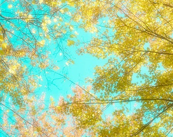 Gold Turquoise Wall Decor,  Fall Photo, Nature Photography, 8 x 10 Print, Autumn Landscape Photography
