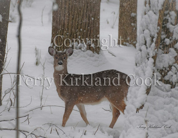 Biltmore Deer ~ Copyrighted Photograph by Terry Kirkland Cook
