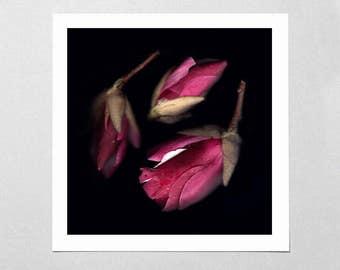 Fine Art Giclée Print - Red Blossoms - Floral - Flowers - Photographic Print