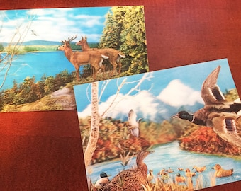 2 3D Wildlife Postcards circa 1970 - Ducks Deer Woodland