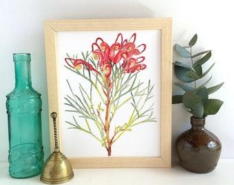 Grevillea flower watercolour print; Australian native plant wall art print A5, A4, 10x8; red & green nature illustration; botanical decor