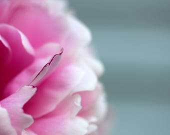 Pink Beauty, Pink Peony, Flower Photograph, Nature Photography, Wall Art, Home Decor