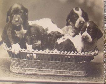 Cute Vintage RPPC (Puppies In A Basket)