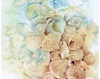 seashell painting, seashell art, seashell watercolor, seashell print, giclee print, watercolor print, nautical artwork, nautical painting
