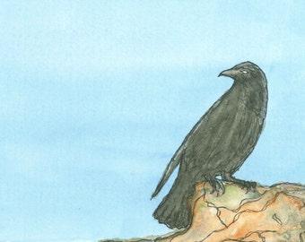 Oregon Coast Raven