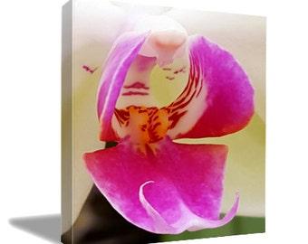 Phalaenopsis White & Pink