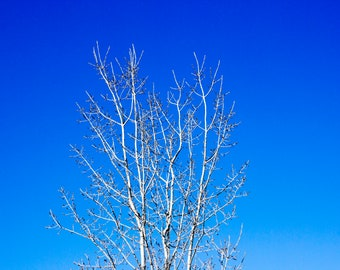 Sky Treetop Photo Download