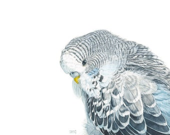 "Parakeet Budgie Bird Print 5x7 of watercolor painting 5"" by 7"""