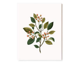 Botanical Scented Card - Sandalwood