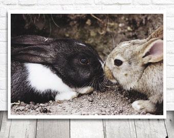 Bunny Print, Bunny Photo Print, Bunny Photograph, Rabbit Print, Rabbit Photo Printable, Printable Wall Art, Digital Print, Instant Download