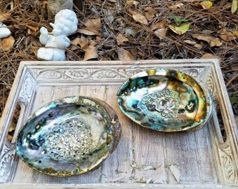 """Abalone Shell  Smudge 6"""""""
