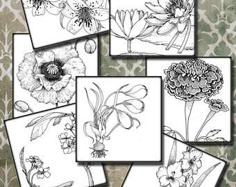 Vintage botanical Flowers    5 in squares black white -  4 set  Digital Collage Sheest, Download , Print Jpeg Clip Art Images