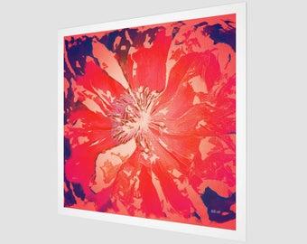 Paradise - Poppy Series No.3 Fine Art Print