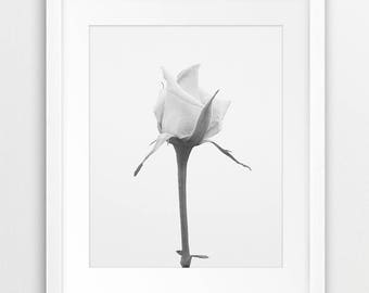 Flower Print, Flower Photo Wall Art, White Rose Wall Decor, Flower Art, Black And White Photography, Botanical Print, Modern, Printable Art