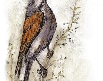 Jay, Wildvögel, kleiner Vogel, Soor, Tierwelt, original Stift und Aquarell-Malerei