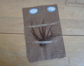 Antique French herbarium dated 1910 real dried botanical specimen