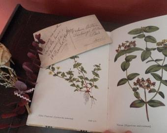 Flowers of the Wood Vintage book and Vintage Paris Birthday Postcard