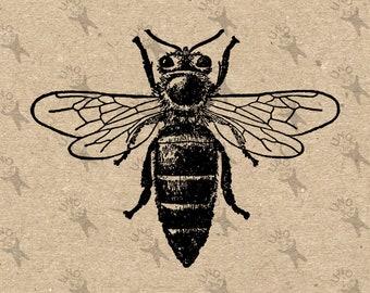 Bee Honeybee Vintage image Instant Download antique Digital printable retro picture clipart graphic transfer burlap print t-shirt HQ300dpi