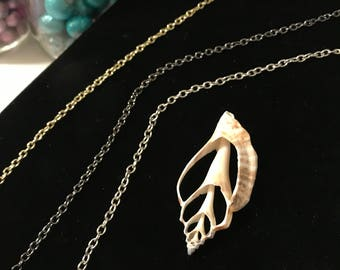 Cut Urceus Shell Necklace