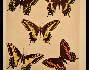 Butterfly Print Butterflies Antique Butterfly Wall Decor Art