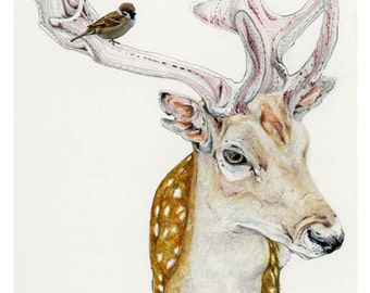 Deer and Sparrow Print Giclee Deer and Bird print 8x11