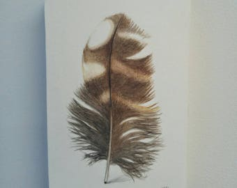 Original Barred Owl Feather, watercolor painting, modern decor, home decor, boho decor, natural decor, feather sketch, nature art