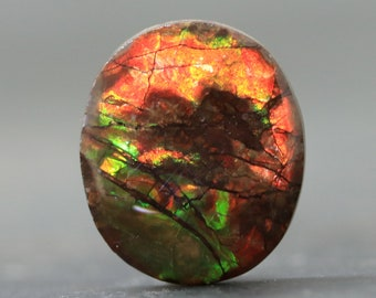Ammolite Cabochon Fossil Iridescent Matrix Natural AAA Canada Ammonite Shell Contemporary Jewelry (V2371)