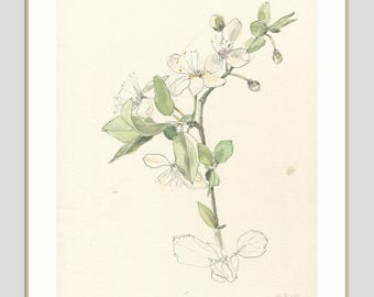 Cherry Blossom drawing ORIGINAL watercolor and pencil drawing of cherry blossom - Floral botanical drawing by Catalina