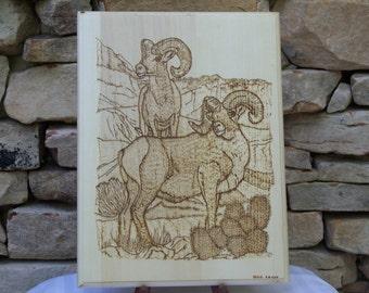 Bighorn Sheep Woodburning Pyrography